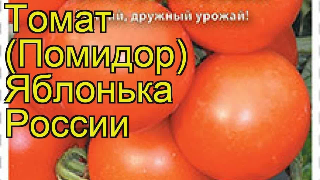 Томат яблонька россии: описание, урожайность сорта, отзывы, фото