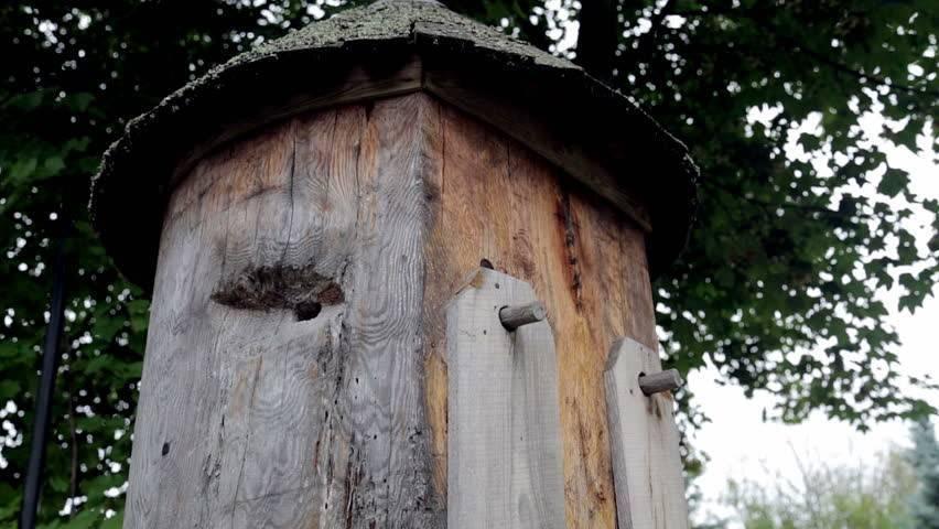 Особенности колодного пчеловодства
