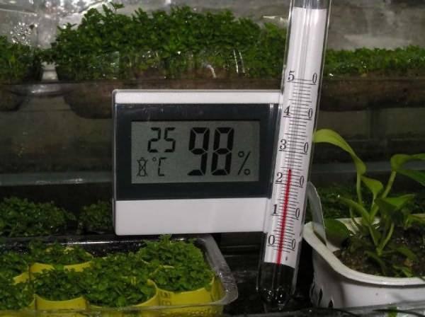 При какой температуре можно высаживать огурцы в открытый грунт