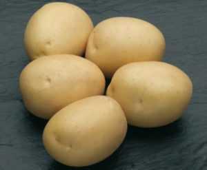 Картофель фелокс: описание сорта и его характеристика