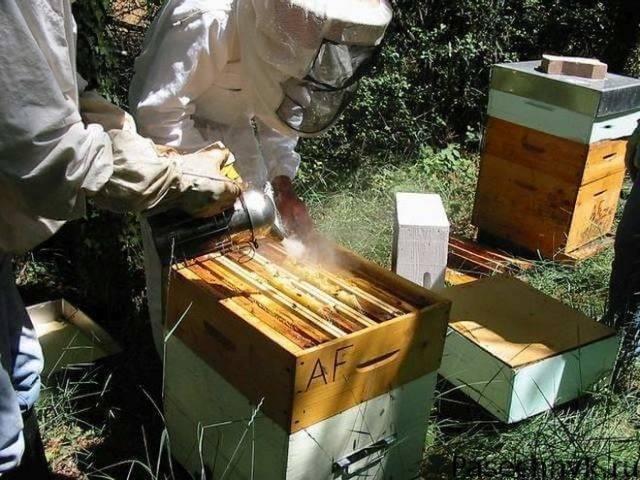 Как вылечить пчел весной от нозематоза