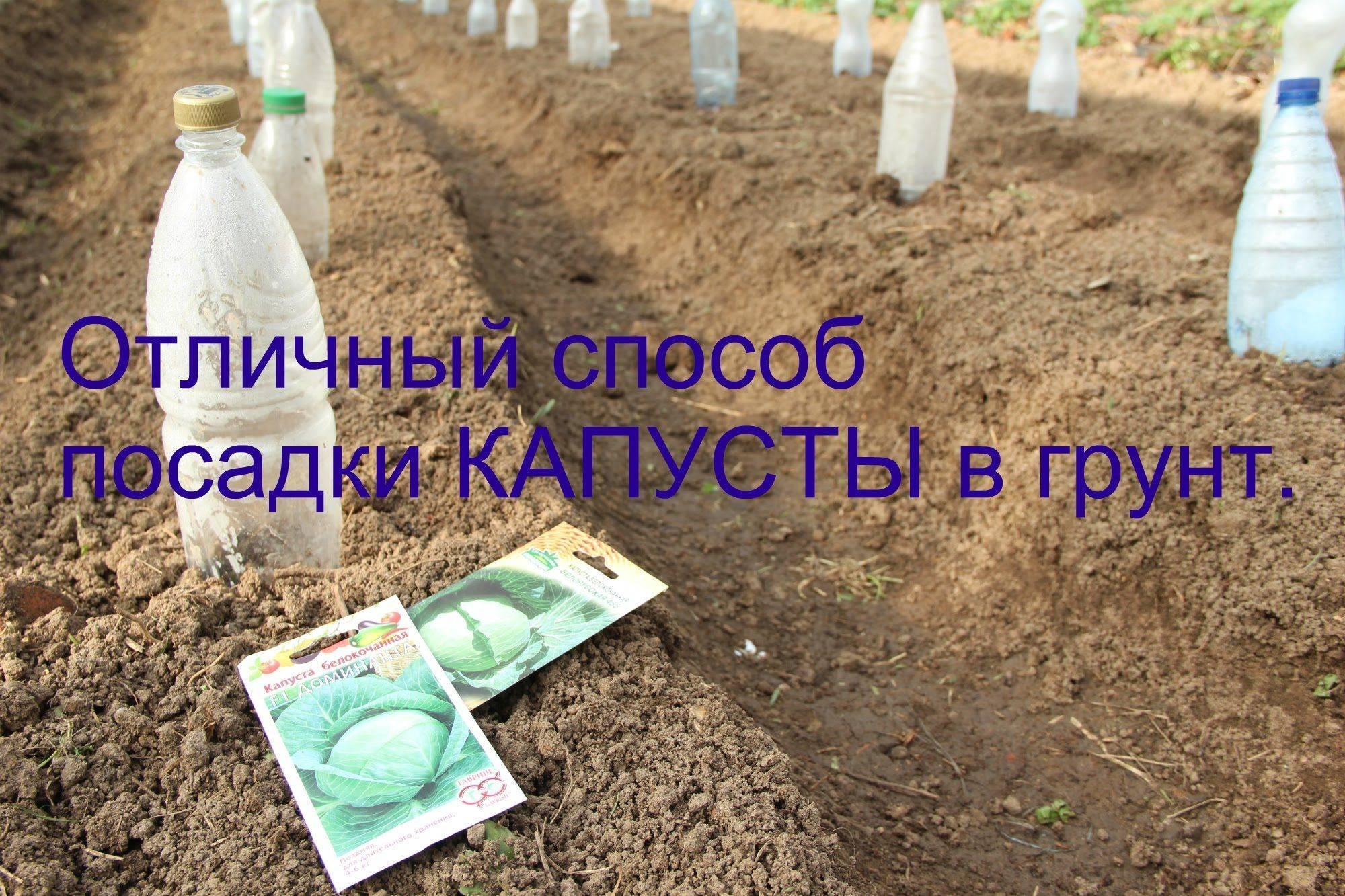 Как посадить и вырастить картофель в мешках технология пошагово, сроки, фото и видео