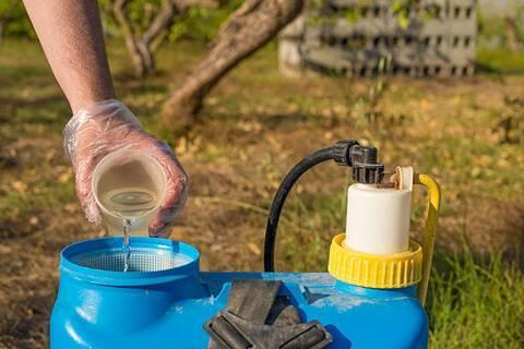 Черная смородина: обработка от вредителей весной, летом и осенью