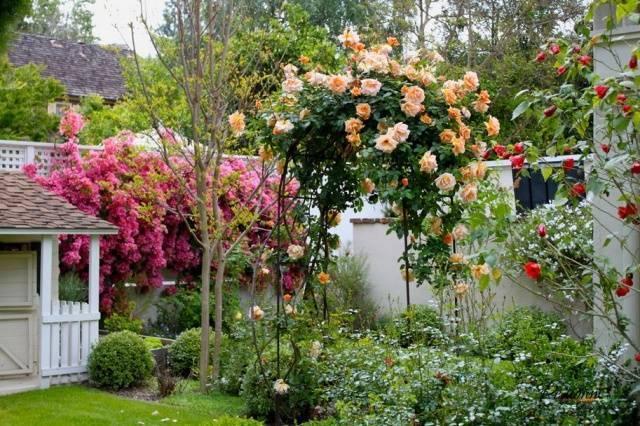 Разновидности и выбор лучших опор для плетистых роз, как создать своими руками