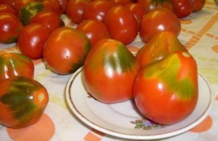 Сорт томата «японский трюфель оранжевый»: описание, характеристика, посев на рассаду, подкормка, урожайность, фото, видео и самые распространенные болезни томатов