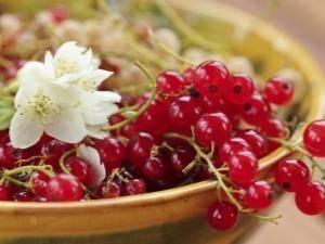 Красная смородина сахарная – преимущества и недостатки сорта