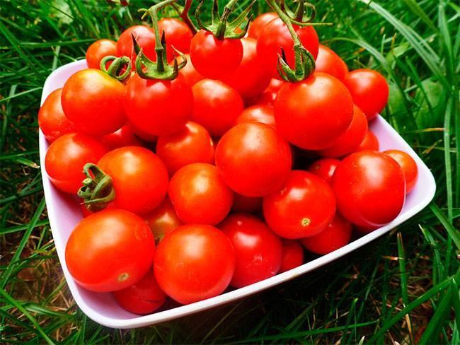 Лучшие сорта томатов для засолки и консервирования