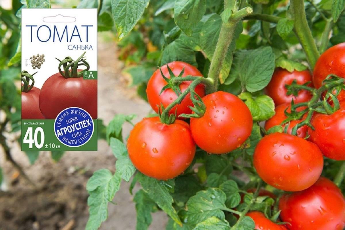 Томат кибо f1: характеристика и описание сорта, фото, отзывы, урожайность