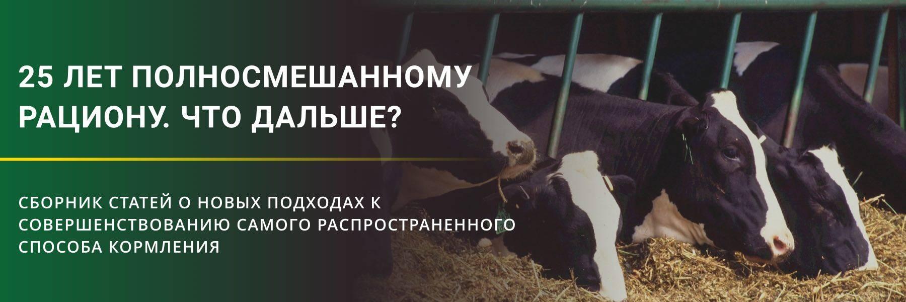 Чем лечить корову после выкидыша