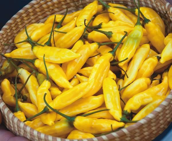 От русского колокольчика до мексиканца-халапеньо: разбираемся в сортах острого перца