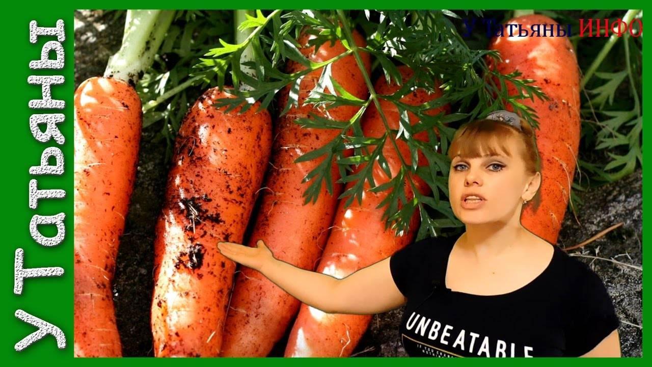 Морковь алтайская лакомка: характеристика сорта и описание выращивания