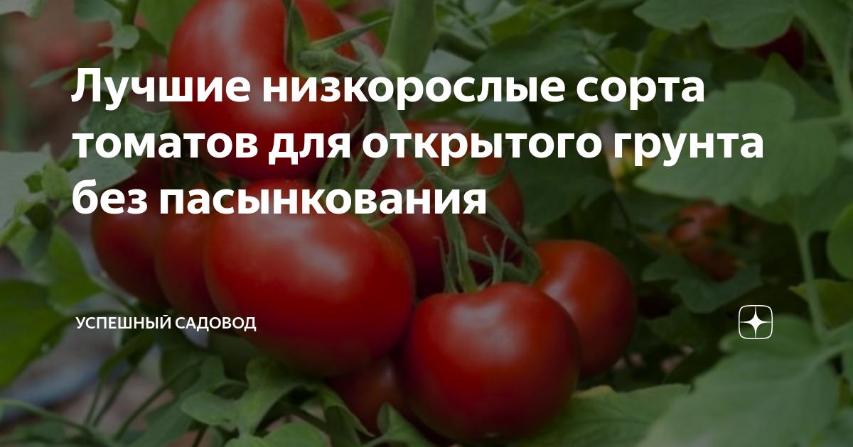 Как выбрать лучшие сорта помидоров для теплиц без пасынкования
