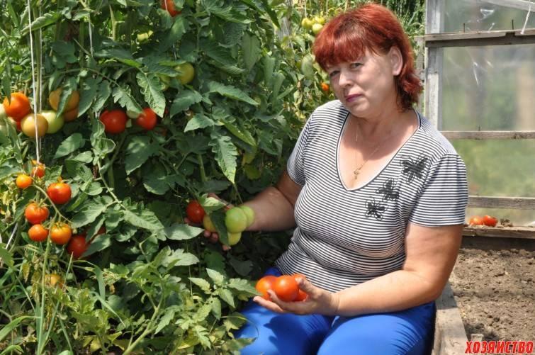 Кистевые томаты для теплиц сорта гибриды + фото