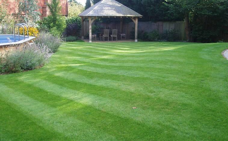Рулонный газон (82 фото): натуральная и искусственная трава в рулонах, виды элитных свернутых покрытий и подбор удобрений, отзывы