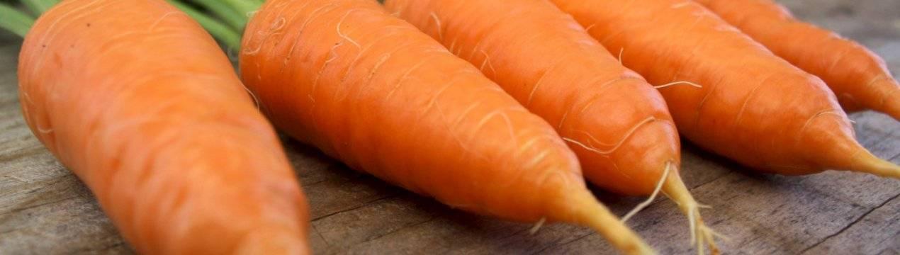 Морковь алтайская лакомка: описание сорта, отзывы, фото, посадка и уход