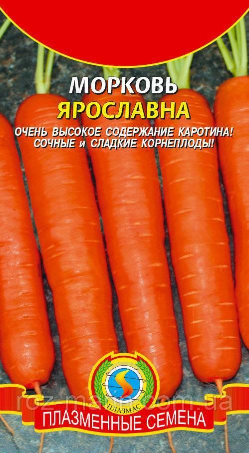 Какого ухода требует морковь ярославна?