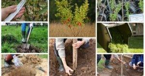 Посадка плодовых деревьев весной: 3 правила и 5 мифов. садоводство