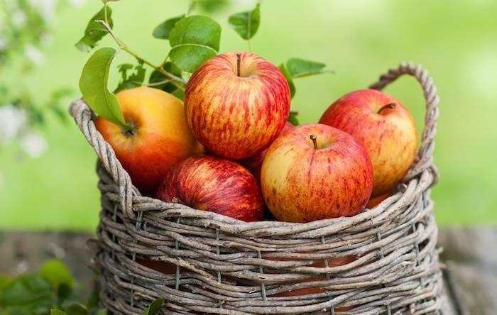 Хранение яблок в погребе с картошкой. как хранить яблоки на зиму?