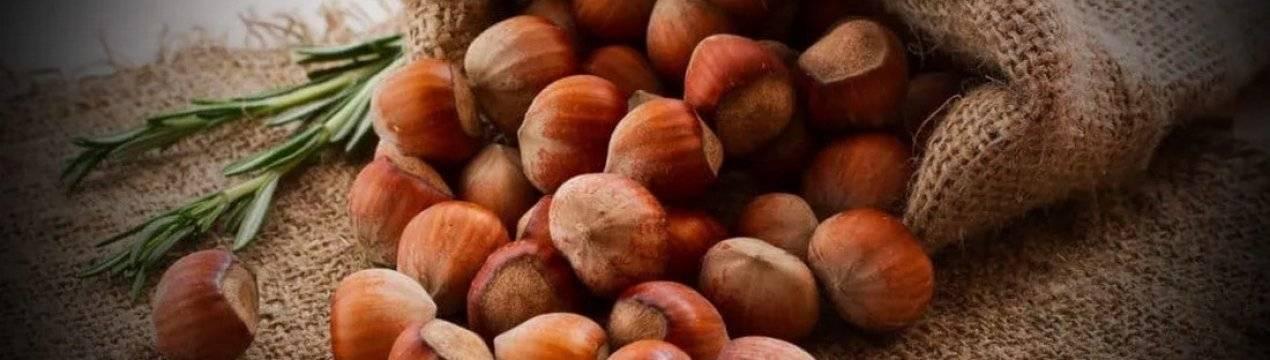 В чем польза фундука (лесного ореха)