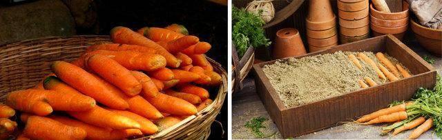 Как хранить морковь на зиму в домашних условиях, чтобы она не высохла, где это можно делать и как ее правильно выкопать: лучшие способы, как сберечь урожай до весны