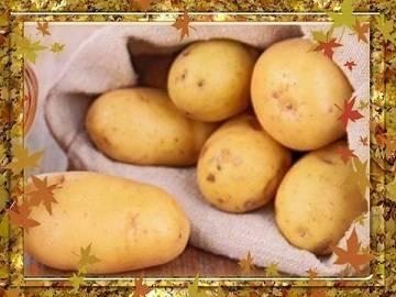 Сорокодневка: описание сортов картофеля, характеристики, агротехника