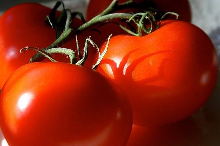Пошаговая схема пасынкования помидор в теплице