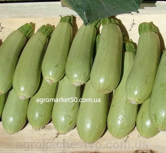 Кабачок сцилли f1 - фото урожая, цены, отзывы и особенности выращивания