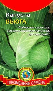 Выдающаяся новинка от сибирских селекционеров — капуста вьюга: описание сорта и характеристика