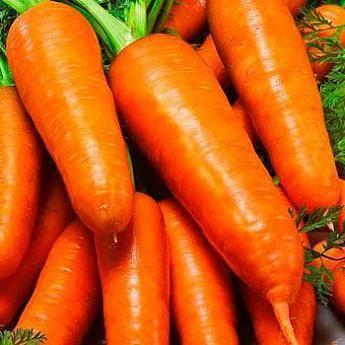 Морковь император описание фото отзывы