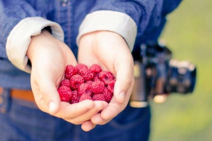 Малина сорта августина: характеристика, особенности выращивания