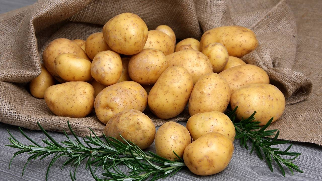 Картофель «удача»: описание сорта, фото, отзывы, особенности выращивания и уход