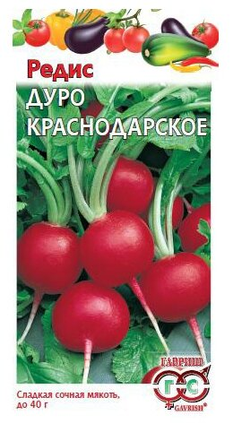 Описание, характеристика и особенности выращивания краснодарского редиса дуро