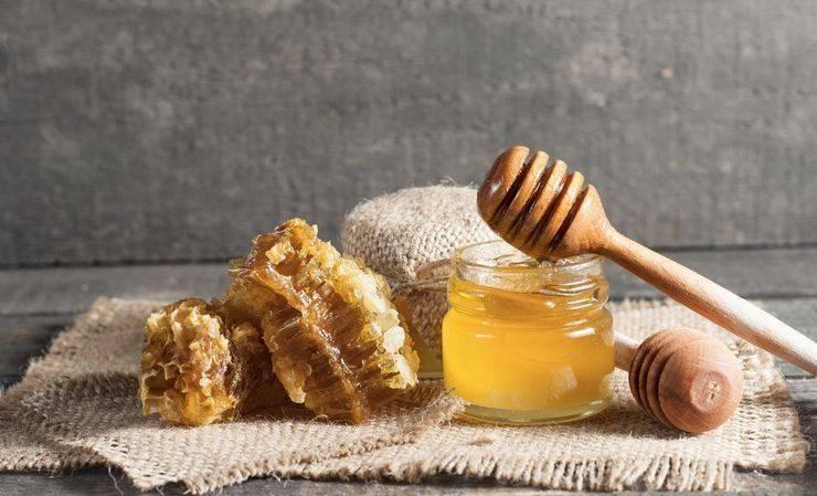 Пчелиная перга: как и сколько хранить пыльцу в домашних условиях
