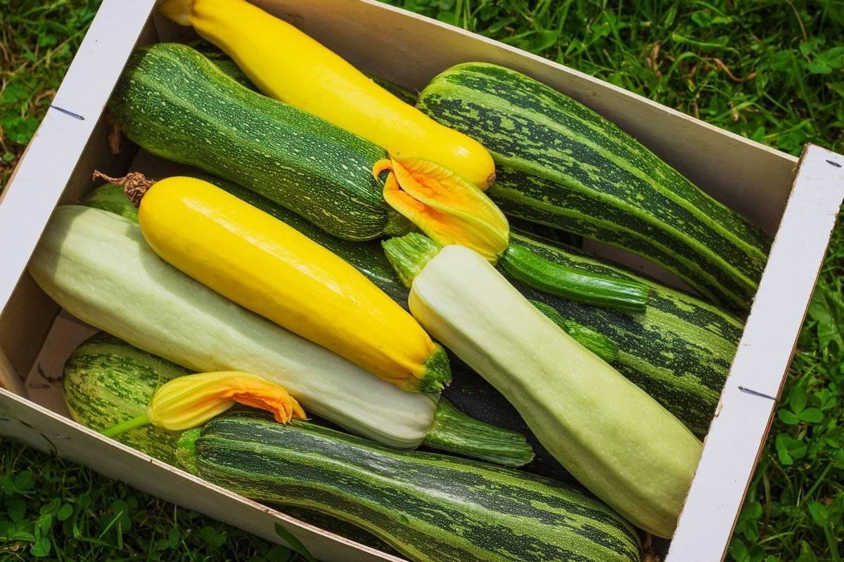 Популярные сорта кабачков: хорошие семена для открытого грунта и фото растущих овощей