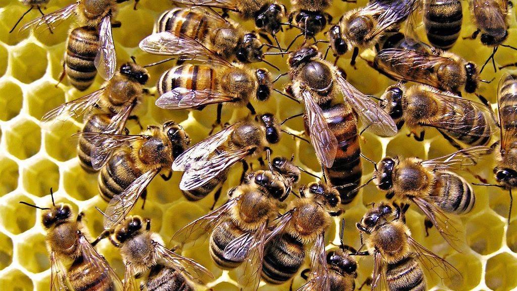 Как открыть бизнес по пчеловодству?