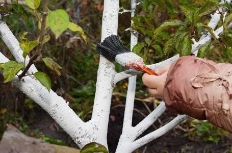 Глиняная болтушка для корней. секреты опытных садоводов: чем замазать спил на яблоне. советы по лечению коры. стоит ли обмакивать корни садовых растений при посадке в болтушку из глины