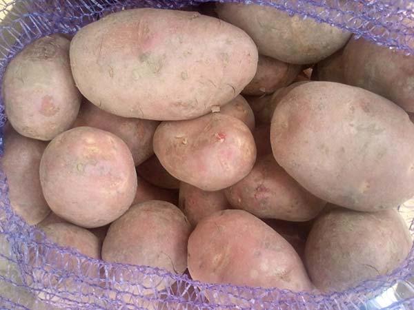 Сорт картофеля ильинский: фото, описание, характеристика