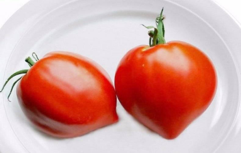 Описание сорта томатов «клубничное дерево» — агрофирмы «сибирский сад»