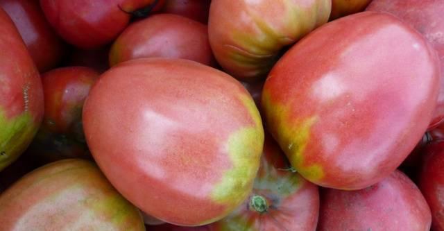Томат «севрюга»: востребованный сорт среди овощеводов
