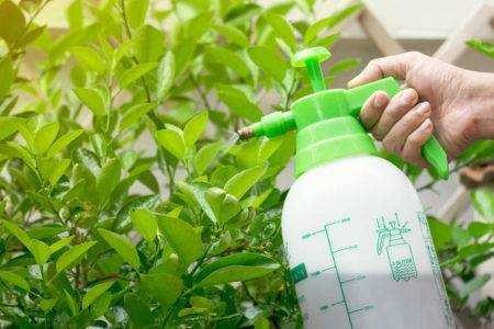 Свитч препарат от болезней растений