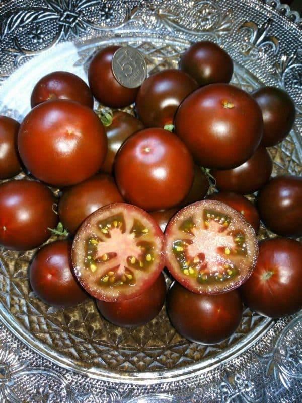 Кумато — томат-полудикарь, получивший мировую известность