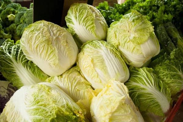 Как вырастить самую сочную и вкусную пекинскую капусту