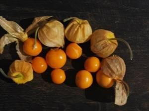 Физалис: секреты выращивания из семян, посадка и уход в открытом грунте