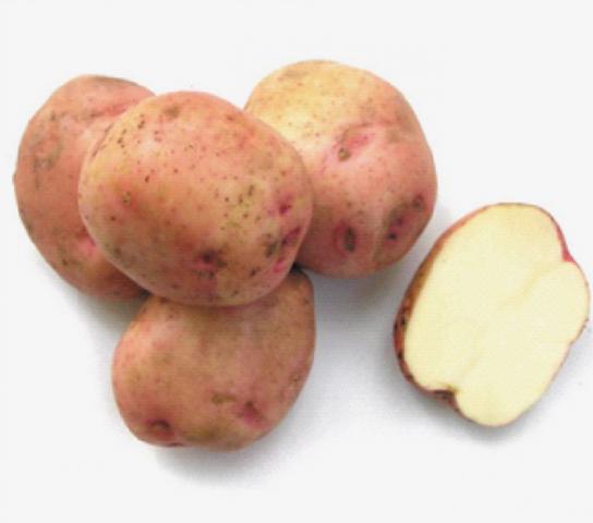 Картофель в сибири: лучшие сорта