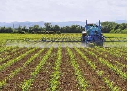 Гербицид по кукурузе: обработка после всходов, выбор почвенного препарата