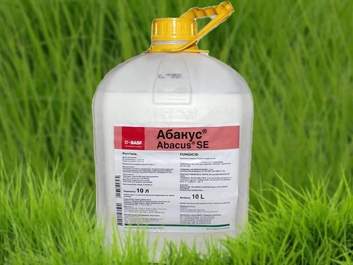 Применение фунгицида абакус для защиты растений
