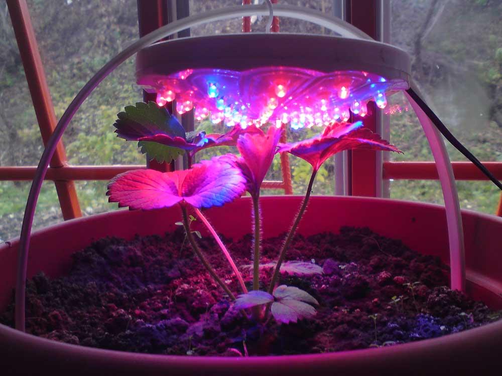 Какие лампы нужны для подсветки рассады? не покупайте лишнего!