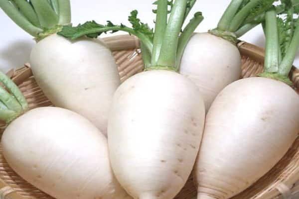 Зеленая редька: чем отличается от черной и как называются сорта, а также советы, как выращивать такой корнеплод, его фото и особенности употребления при беременности