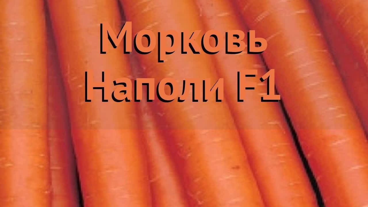 Какие сорта моркови самые лучшие — ранние, средние и поздние. жми!