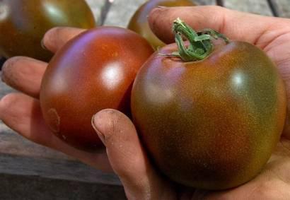 Описание томата черный ананас